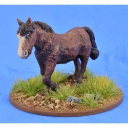 Shaggy Pony (Bareback) – LIV05