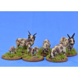 Sheep (Manx Loaghtan) – LIV01